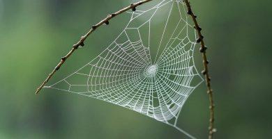La importancia ecológica de las arañas 3