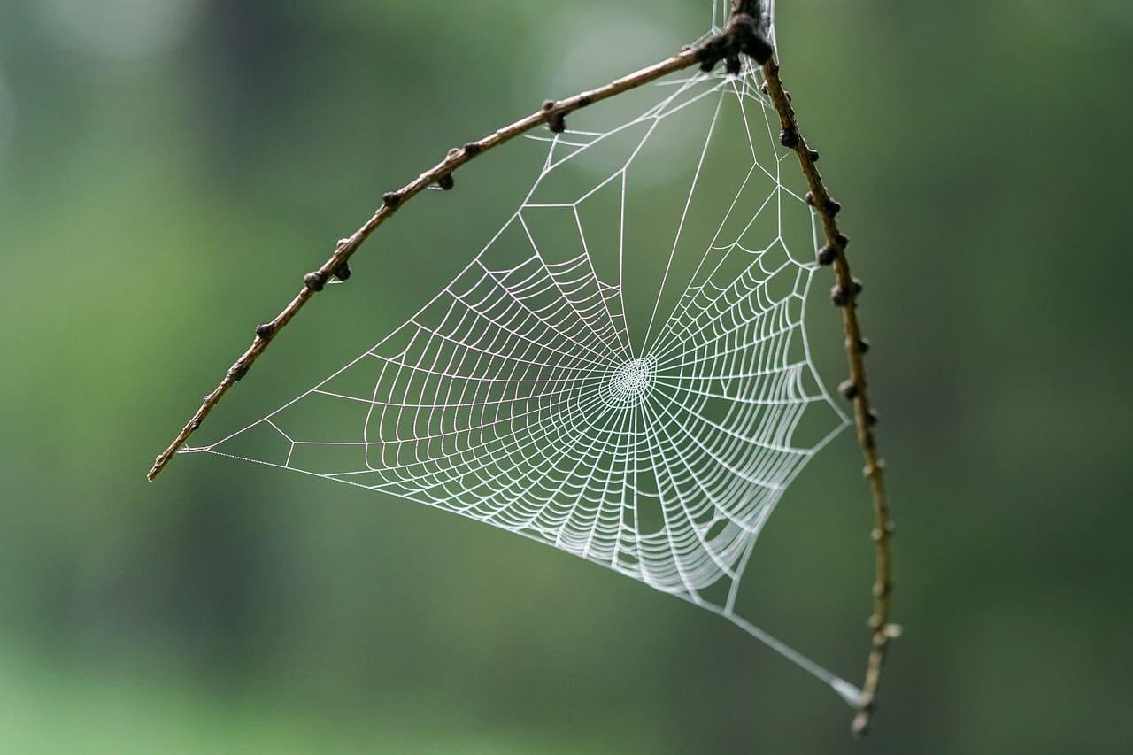 La importancia ecológica de las arañas 2