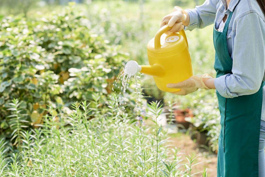 Ideas de insecticidas caseros